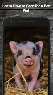 How to Take Care of a Pet Pig (Guide) 1.3 Mod APK Download 1