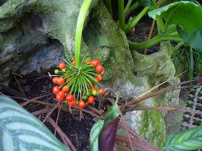 Photo: pianta esotica
