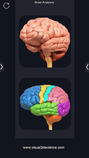 Brain Anatomy Pro. 1.6 screenshots 1