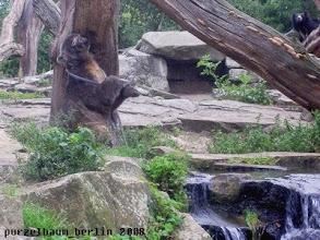 Photo: Knut spielt mit dem Schlauch :-)