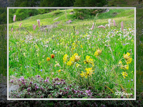 Photo: Alpage fleuri (Anthyllide vulnéraire, Anthyllis vulneraria;Serpolet, Thymus serpyllum;Bistorte, Polygonum bistorta;Silène enflé, Silene vulgaris;Trèfle bai, Trifolium badium; ...)