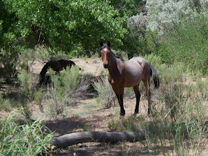 Photo: Feral mares