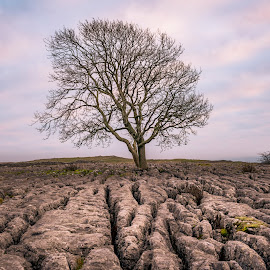 Clints, Grykes and a Tree by Darrell Evans - Nature Up Close Trees & Bushes ( pavement, sky, yorkshire, countryside, grykes, tranquil, clouds, karst, stone, outdoor, bare tree, environment, calcium carbonate, yorkshire dales, malham, limestone, no people, clints, landscape )