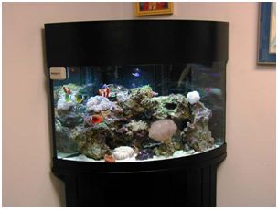 aquarium design - Quarter Cylinder
