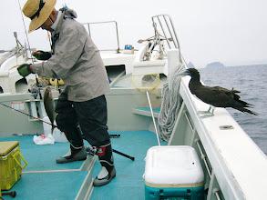 Photo: 船に魚を上げてからも大変! 「コイツ」に取られないようにするのが・・・。