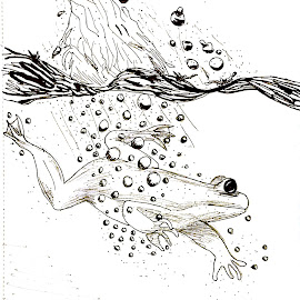 The Dive by Melissa Toothman - Drawing All Drawing ( frog, bubbles, dive, splash, water )