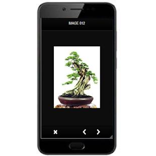 Bonsai Beautiful Design Ideas - náhled