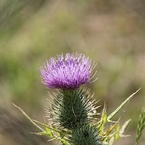 Purple Flower by Tristan Wright - Flowers Flowers in the Wild ( macro, purple, spikey, close up, outside, flower, purple flower,  )