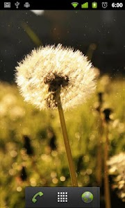 dandelion live wallpaper screenshot 1