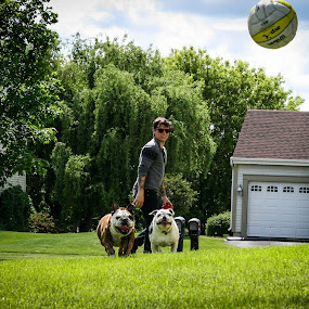 Chasing the ball by Maria Sicilian - Animals - Dogs Running ( english bulldog, elkhound, ball, dogs, chasing, green, excited, norwegian elkhound, rtunning, excercise, bulldog, norwegian, happy, outdoors, english, outside )