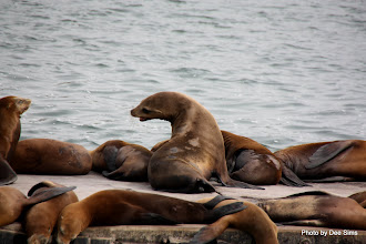 Photo: (Year 3) Day 20 - Seals Sunbathing #5