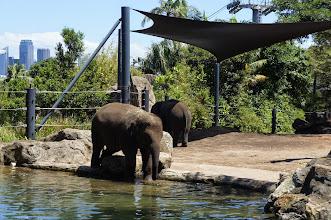 Photo: 象
