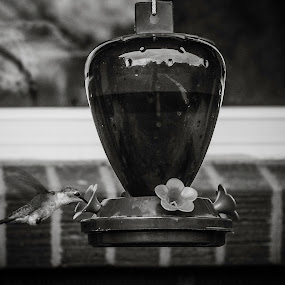 Hummingbird by Jason Murray - Animals Birds ( b&w, fast, contest, anything that can fly, nature, feeder, hummingbird, feeding, bird, animal, animals,  )