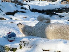 Photo: Beschaeftigt sich Knut eben mit dem Ball ;-)