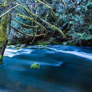 Cedar By The River.jpg