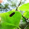 Firefly; light bug; lightning bug