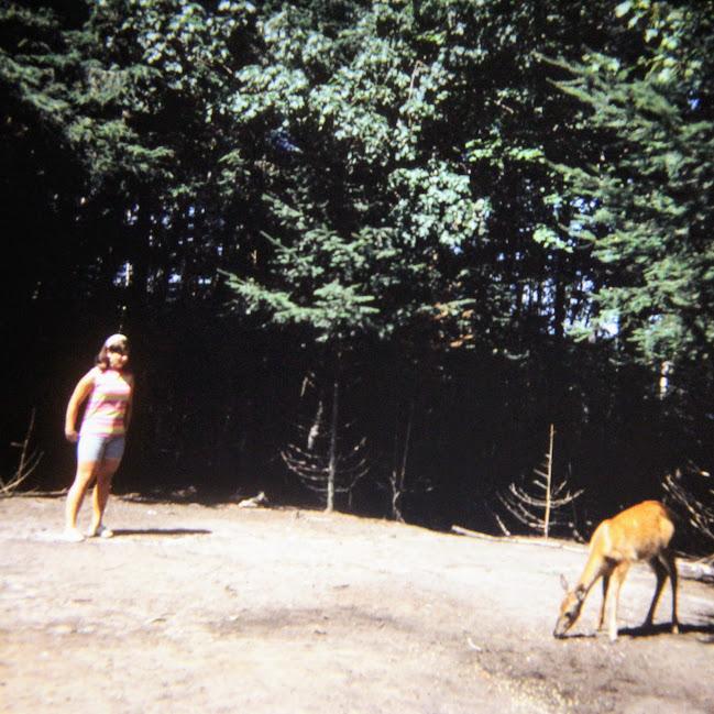 Aqualand Vilas County WIsconsin Deer