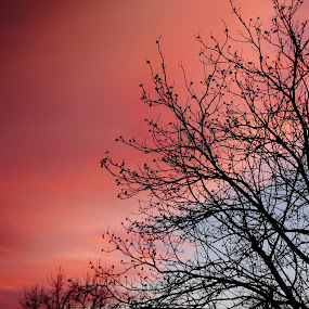 by Tadeia Fedor - Landscapes Sunsets & Sunrises (  )