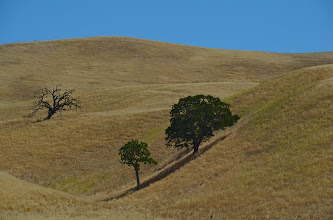 Photo: 144. In such a stark landscape - here, along Highway 25, heading south toward Pinnacles - there is still a strange kind of beauty ... Many rolling hills, filled with just one type of grass.