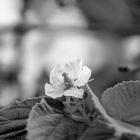 by Frans Priyo - Flowers Flowers in the Wild