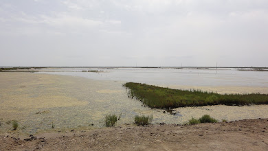 Photo: View across salt lagoon from hide, Tancada conservation area
