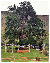 Photo: Bunting around the old oak tree