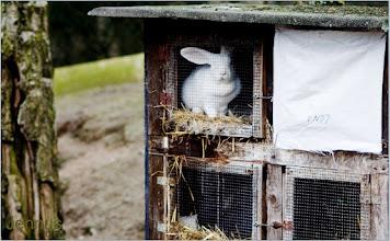Photo: Hasenstall auf dem Bauernhof
