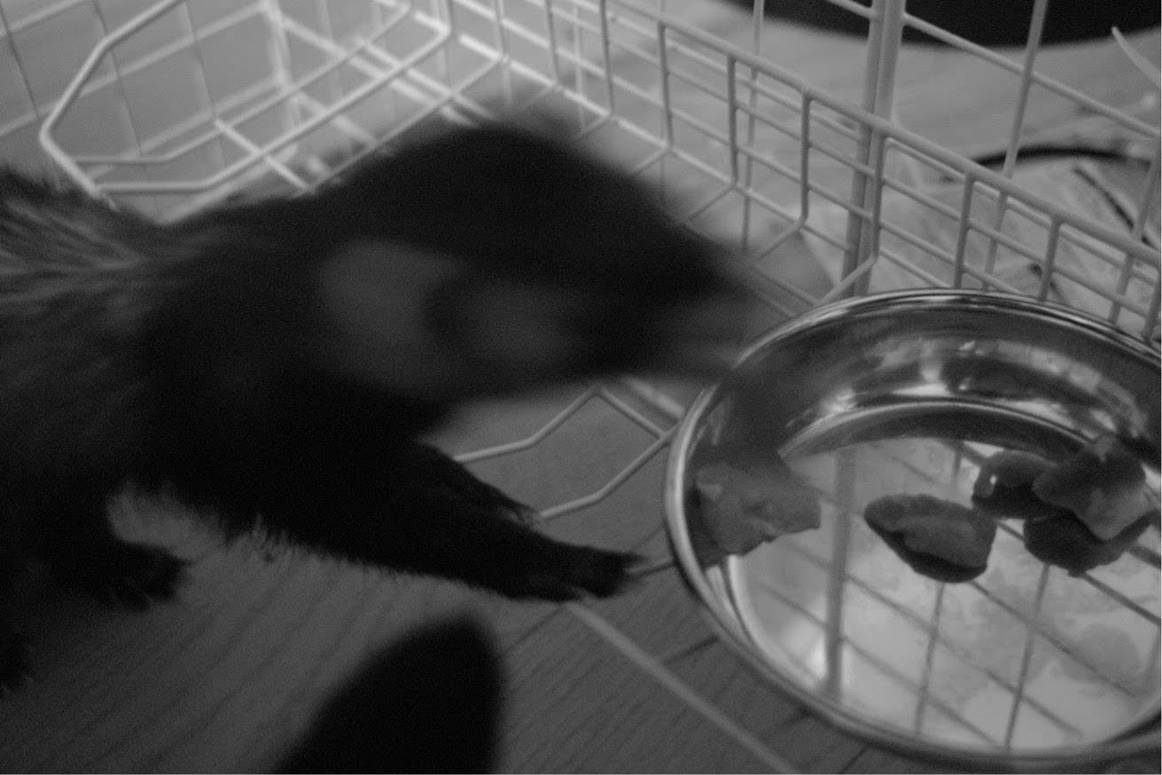 猫、ヨン、ノスタルジック、白黒写真、DP2