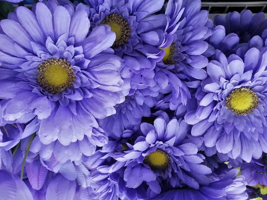 Magical by Monroe Phillips - Flowers Flower Arangements (  )