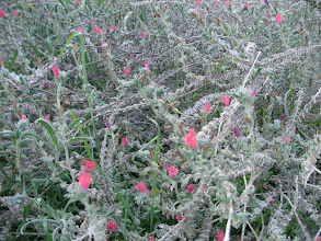 Photo: Patara Kumulu çiçekleri - 12.11.2011
