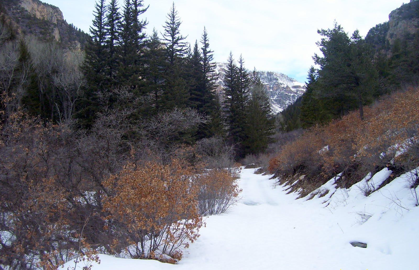 Photo: Snow, rain and spring water enters East Elk Creek.