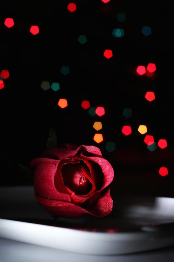 Red Rose For You by Tonny Ernawan - Artistic Objects Still Life