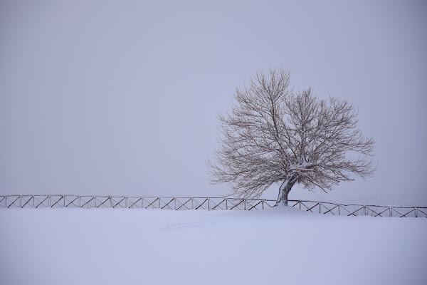 Mr. Inverno di s_ornella