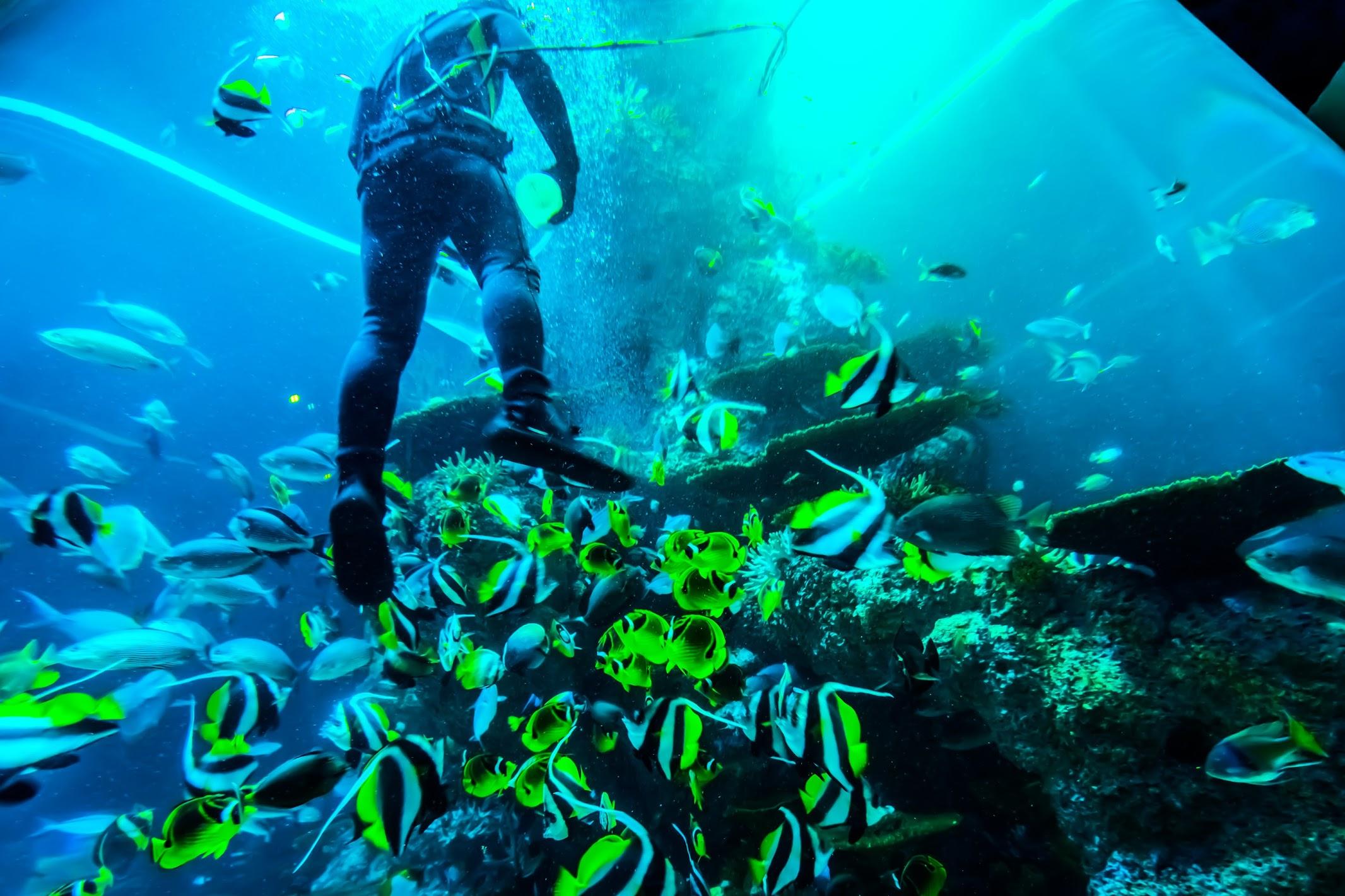 シンガポール セントーサ島 シー・アクアリウム Coral Garden3