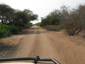 Photo: Von Mapai bis Pafuri ist die Piste sehr holprig!