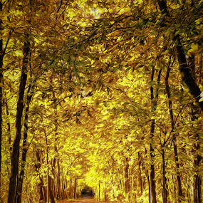 by Greg Croasdill - Landscapes Forests ( adventure, fall colors, autumn, fall,  )
