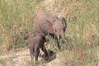 Photo: African Elephants