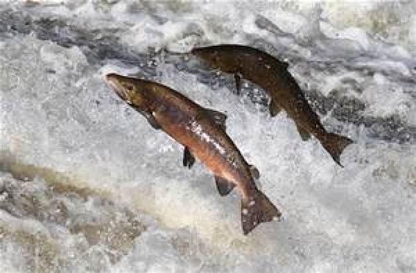 Individual Salmon Quiche Pies (sallye) Recipe