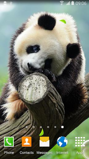 mod Cute Panda Live Wallpaper 1.0.5 screenshots 1