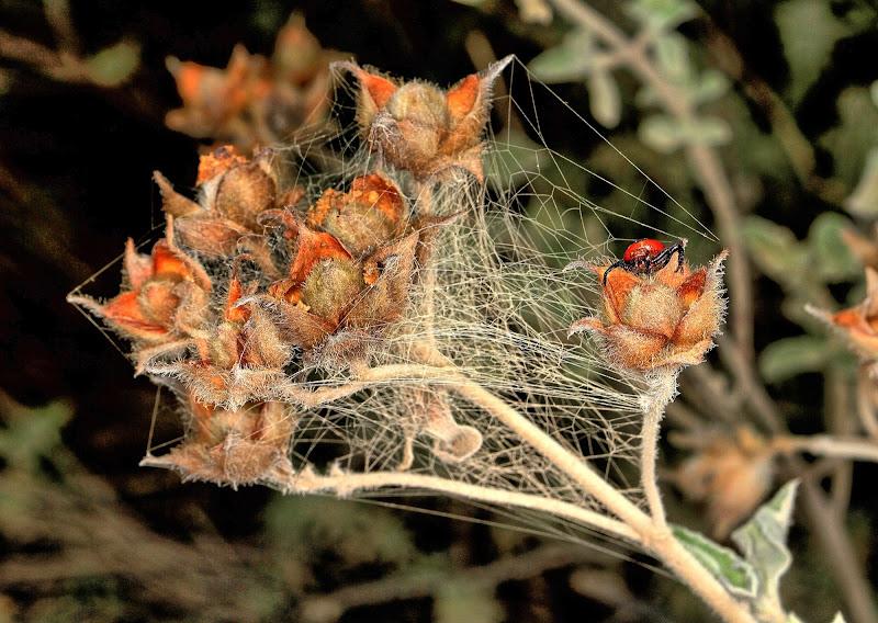 Costruzione di un ragno di Princi Felice