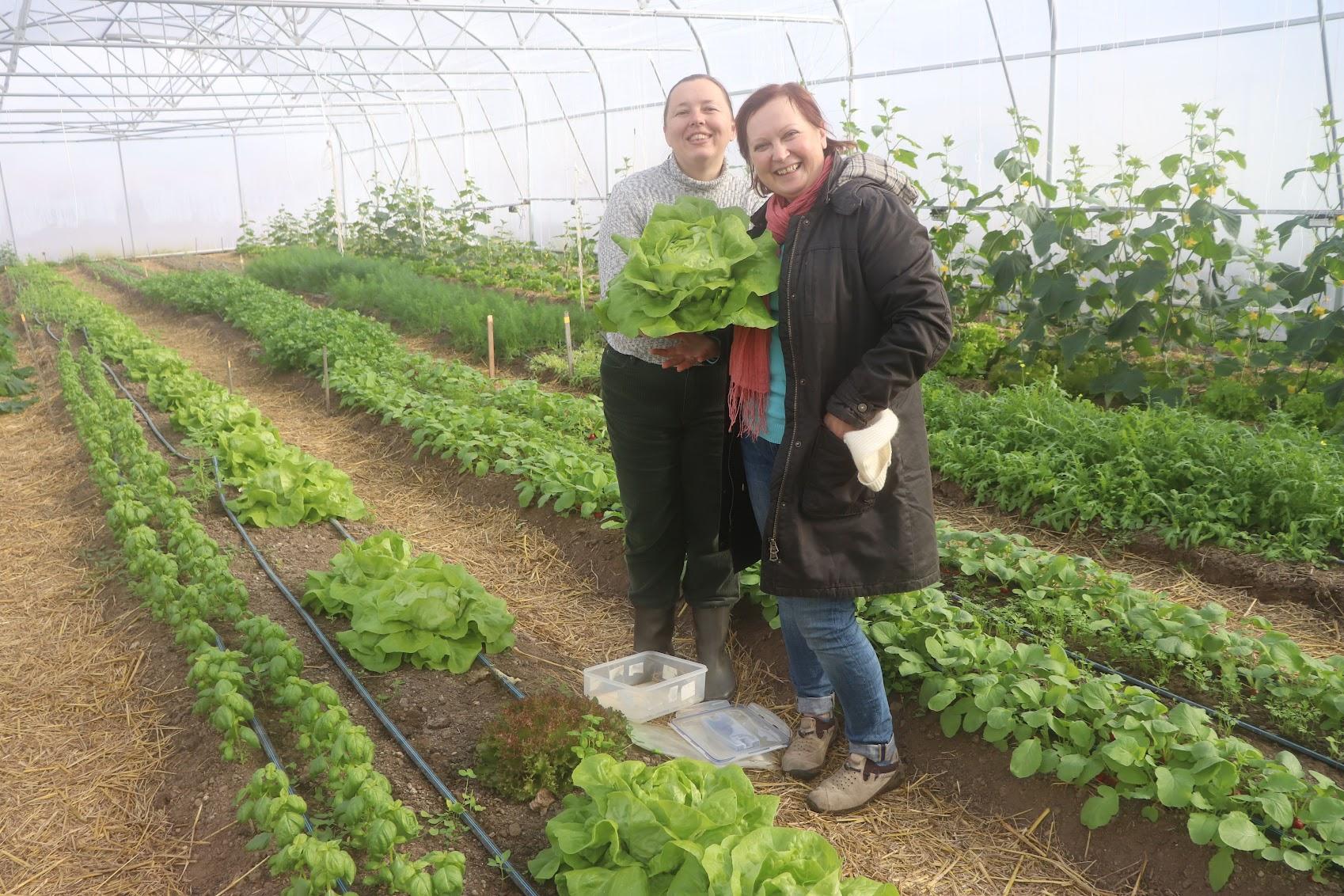 органическая зелень купить киев