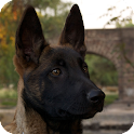 Belgian Shepherd Wallpaper icon
