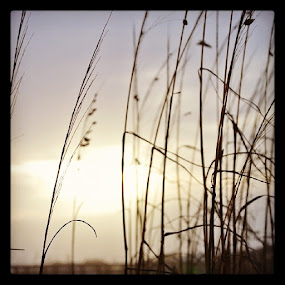 by Wesly Sinulingga - Nature Up Close Leaves & Grasses ( tybee, island, georgia, sunset, beach, grass, travelling, nature )