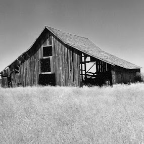 Abandoned by Terese Hale - Buildings & Architecture Decaying & Abandoned ( oregon, old, barn, forgotten, abandoned )