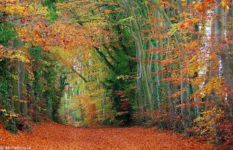 "Photo: Autumn in England - A ""thousand"" miles away"