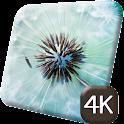 Pretty Dandelion Flower 4K icon