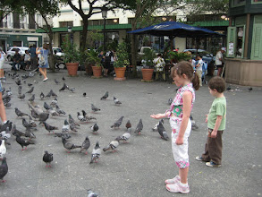 Photo: Pigeons in Old San Juan