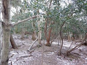 灌木の中を進む