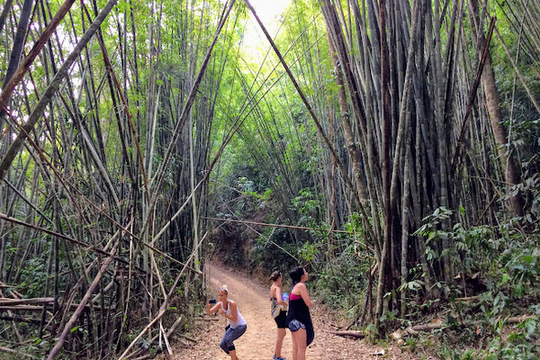The Park is filled with bamboo, the fastest growing plant in the world