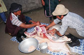 Photo: 03392 ブルド/ハスバター家/羊の解体